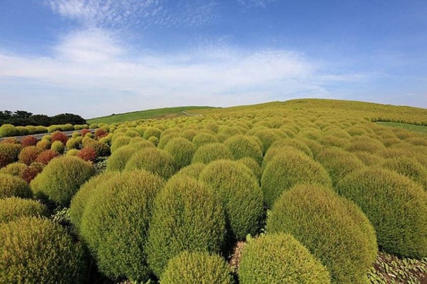Живописный японский парк Хитати Кайхин 0 1422d2 a229ed7f orig
