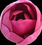 magnolia 20.png