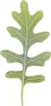 dp_mtw_Leaf4.png