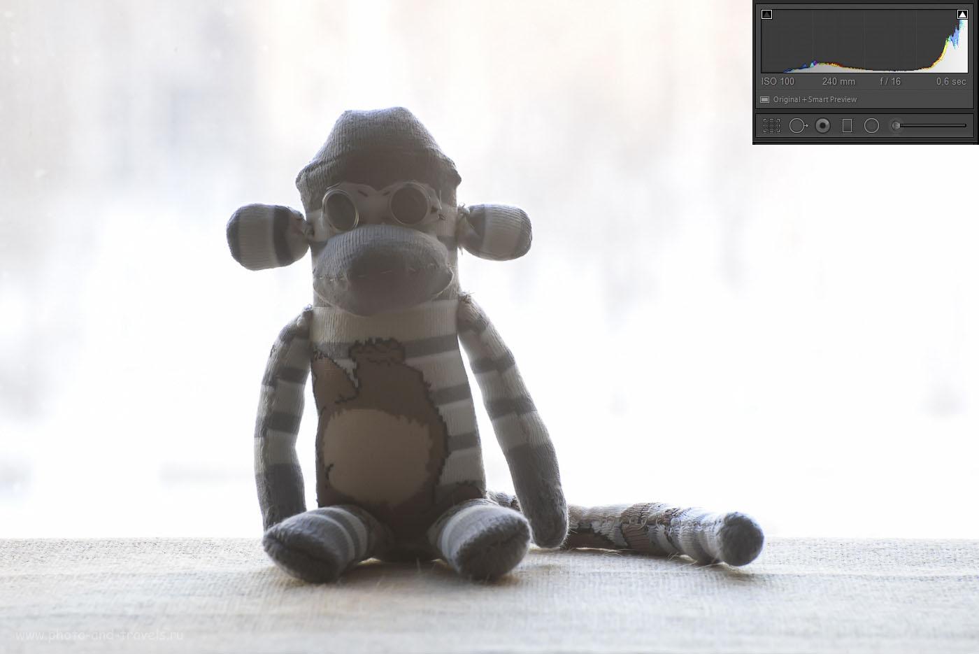 Фото 14. Пример съемки против света с использованием экспозамера по точке фокусировки (на обезьяне). Как видим по визуально и по гистограмме – фон у нас выбило. Уроки фотографии для новичков. 1/2, F/16.0, 100, 240 мм.