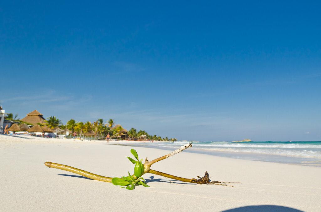 """Фотография 1. Отдых в Мексике. Пляж в Тулуме. Отзывы туристов. На данной фотографии наш отель """"Amansala Eco-Chic Resort"""" виднеется вдалеке: хижина с соломенной крышей. Снятон на зеркальный фотоаппарат Nikon D5100 KIT 18-55 VR."""