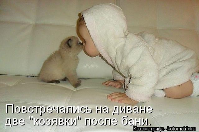 kotomatritsa_T2.jpg
