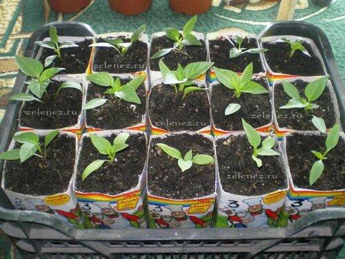 Светодиоды в деле овощеводства