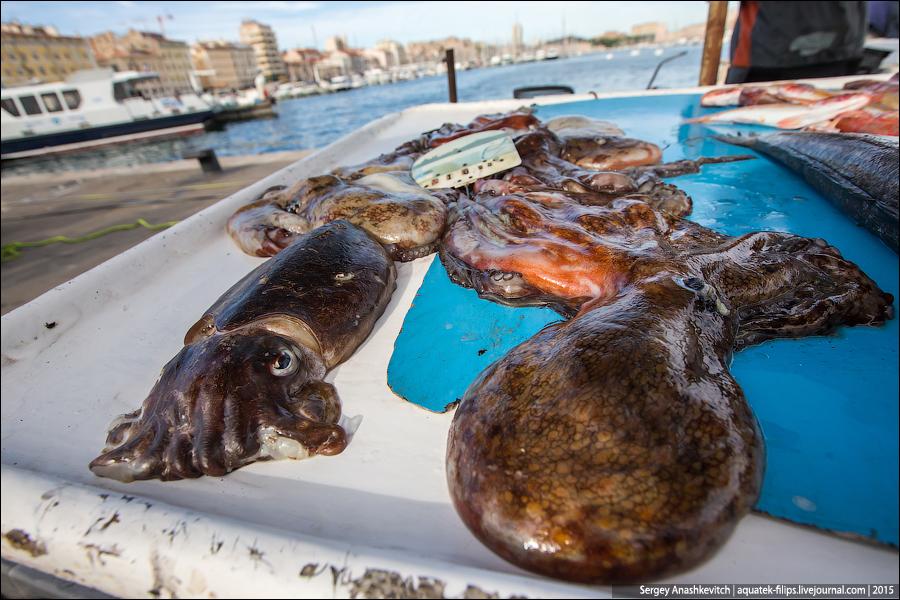 Рыбный рынок в Марселе