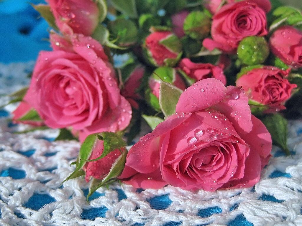 Плейкаст я тебе подарю розы