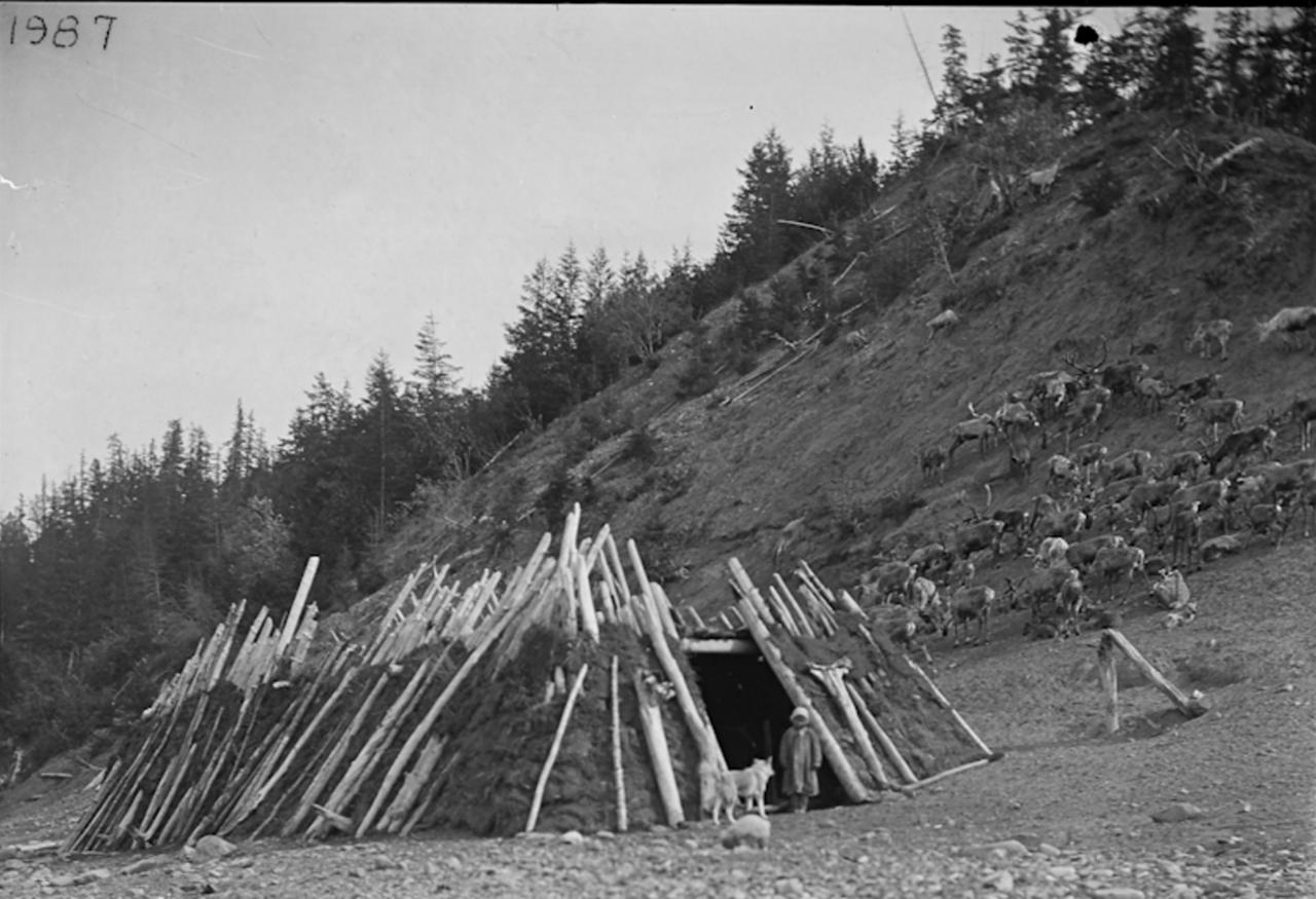 Якутская хижина и олени. 1900