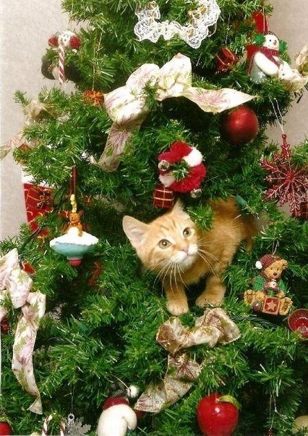 Коты на ёлке - фото 13