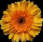 jsn_studioNDC_round2_am_flower4.png