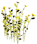 Lug_Grass_Flower (39).png