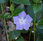 Полевые цветы / Wildflowers
