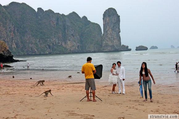 свадьба с обезьянами в краби