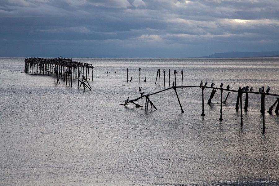 6. Пунта Аренас и фауна Магелланова пролива