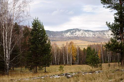 Лес возле деревни Тюлюк