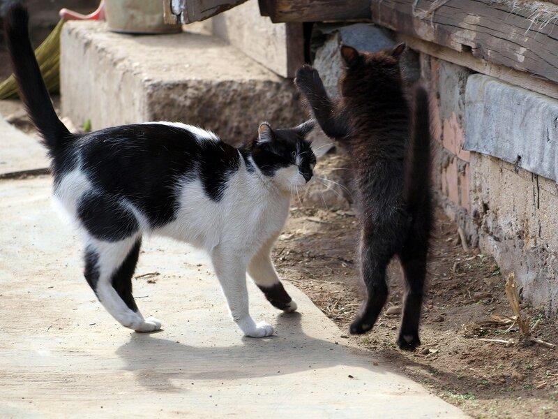 Кошки и котята спасателей P4281364.jpg