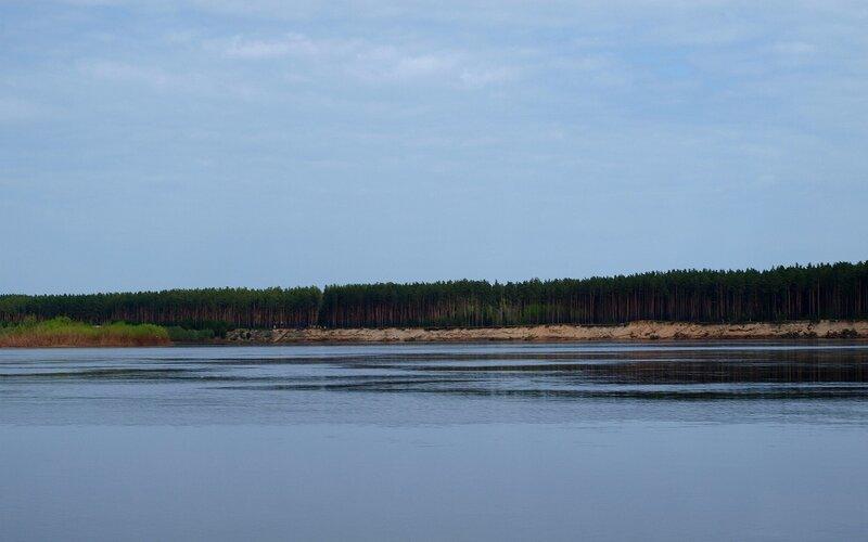 Сосновый бор на противоположном берегу Вятки P5172618