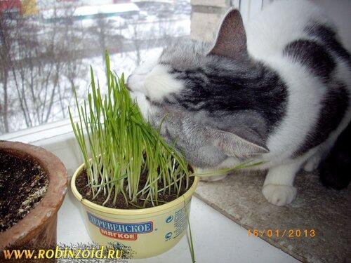 кот-вегетарианец