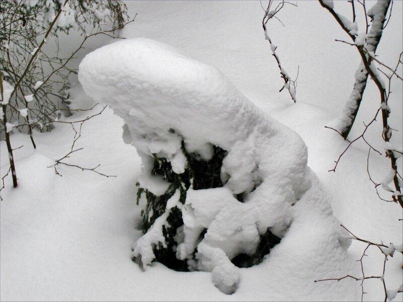 Елочка под снегом