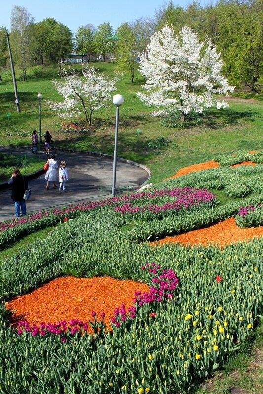 Начало выставки тюльпанов на Певческом поле