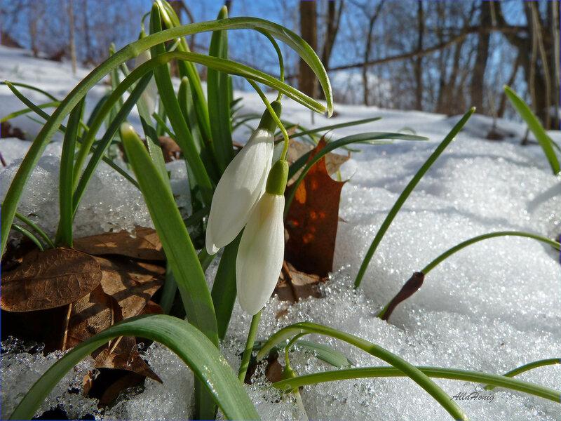 На пригорке встретились весна, зима и осень