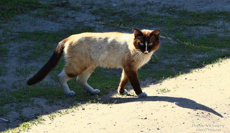 Кошки & Коты (2012)