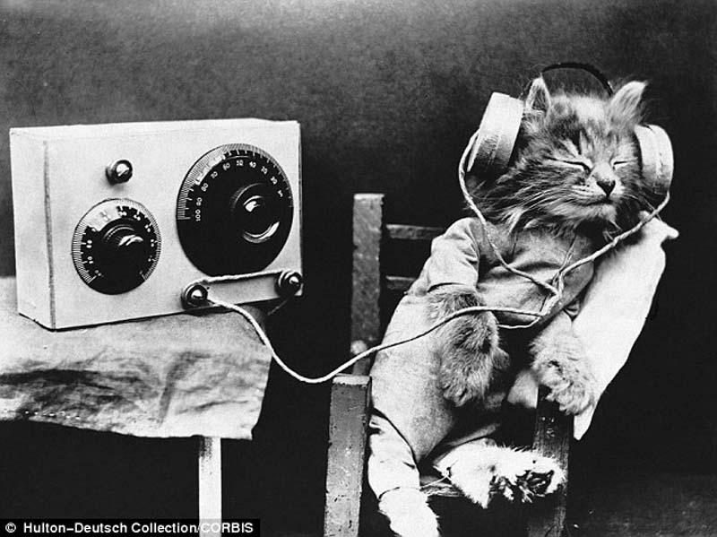 Пушистый меломан: Тибби слушает радио в наушниках, 1926 год