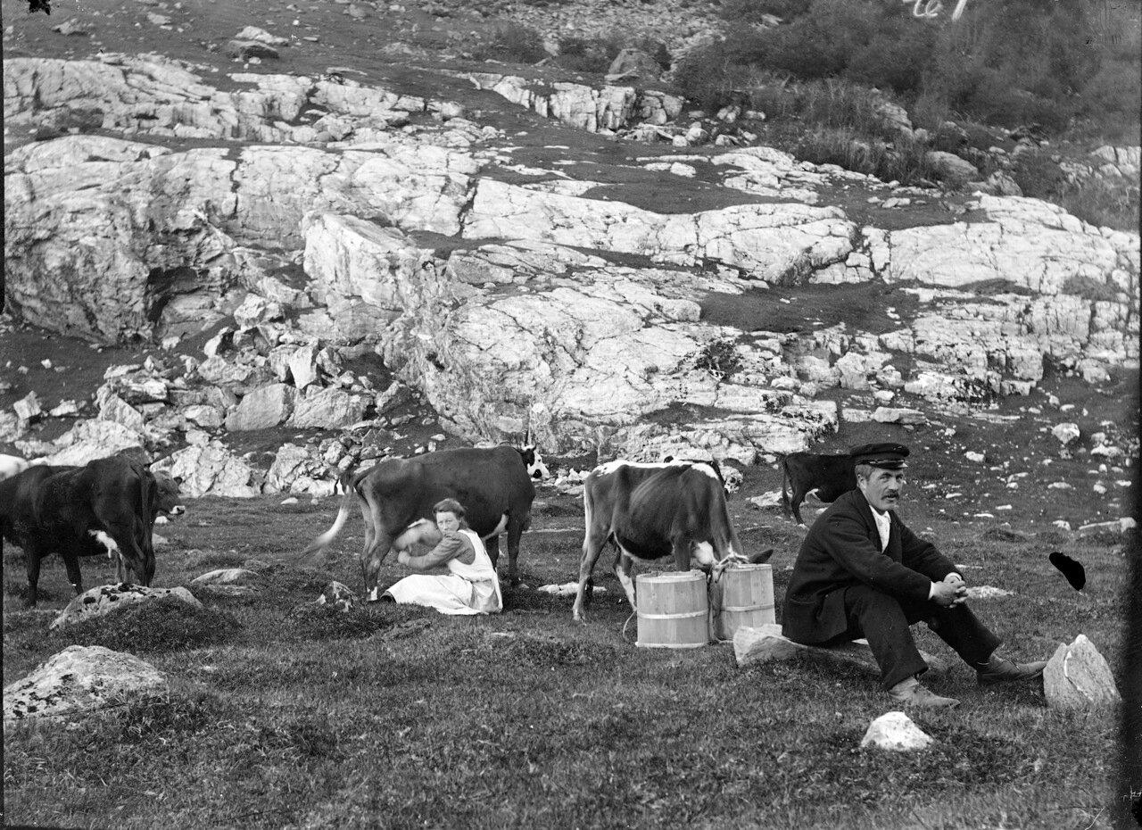Доение коров на одной из ферм. 1910