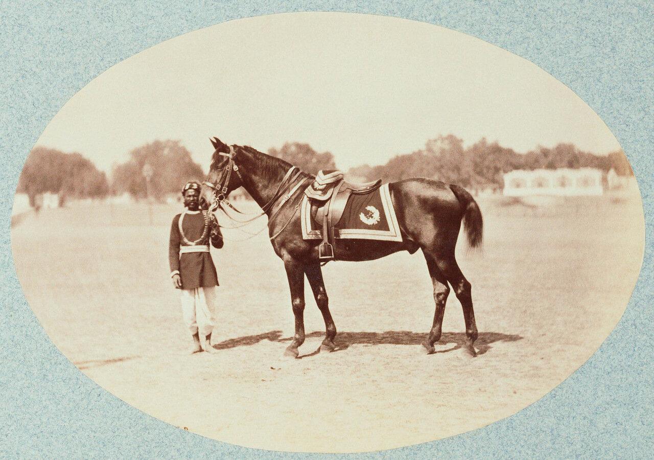 Лошадь Его Королевского Высочества