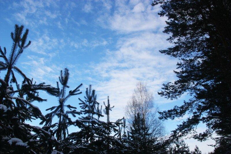 зимний лес, небо, лыжи, снег
