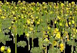 Lug_Grass_Flower (16).png