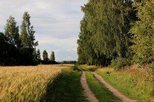 с.Рябчи. Дорога на Любимовку, справа за деревьями улица Киселёвка