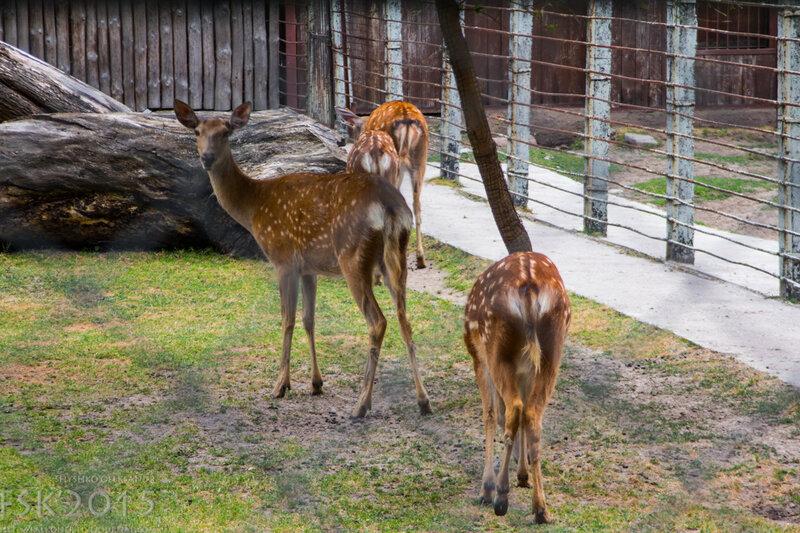 kyiv_zoo-15.jpg