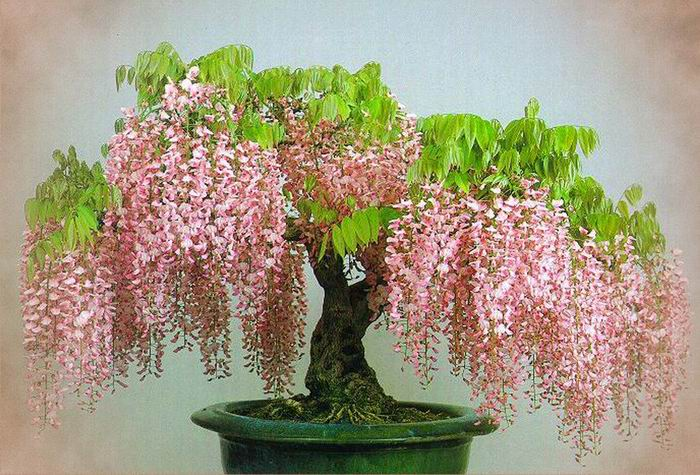 Красивые комнатные растения фото