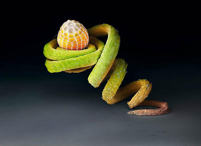 1. Яйцо бабочки Dryas iulia Этому яйцу бабочки Dryas iulia на усике страстоцвета могут не угрожать г