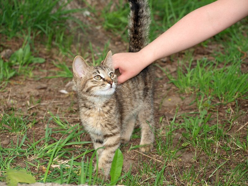 Кошки и котята спасателей P5172971.jpg
