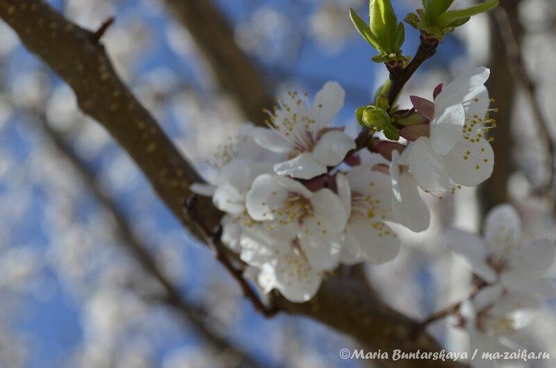 В цвету, Саратов, 29 апреля 2013 года