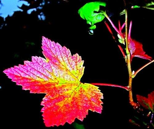 Ладошка  Осени