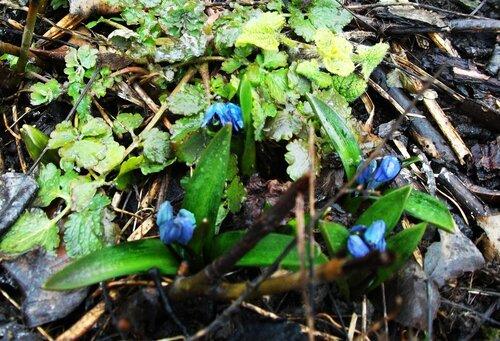 Весна пробивается
