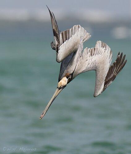птица-гончар