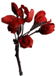 feli_btd_red flowers branch.png