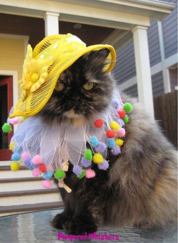Каждой котятке по шапке