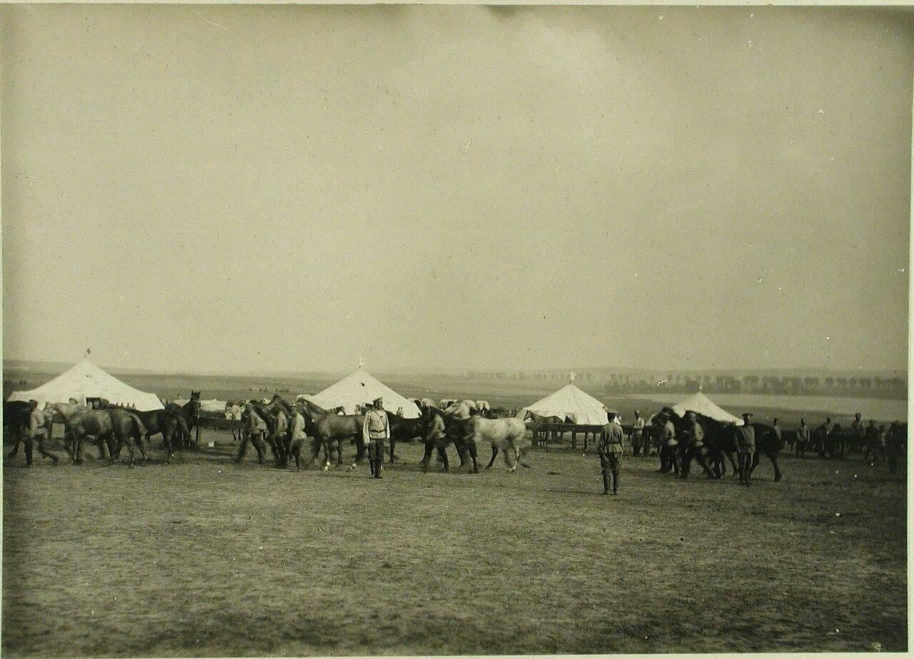 Лагерь санитарного конного транспорта. Местечко Черный Остров, Подольская губ. 1914