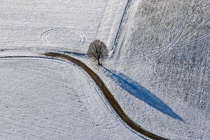 Baum mit Kreis