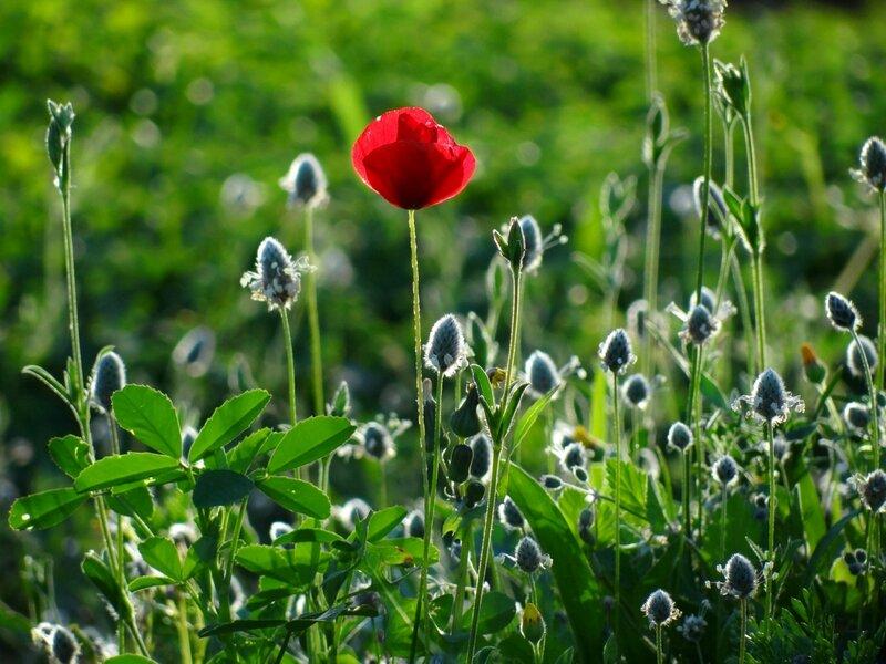 Аленький цветочек!!