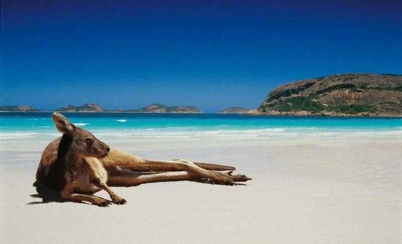 кенгуру, мальдивы, песок