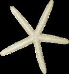 jsn_round4_mopb_starfish3.png