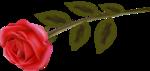 ValentinsDay - 061.png