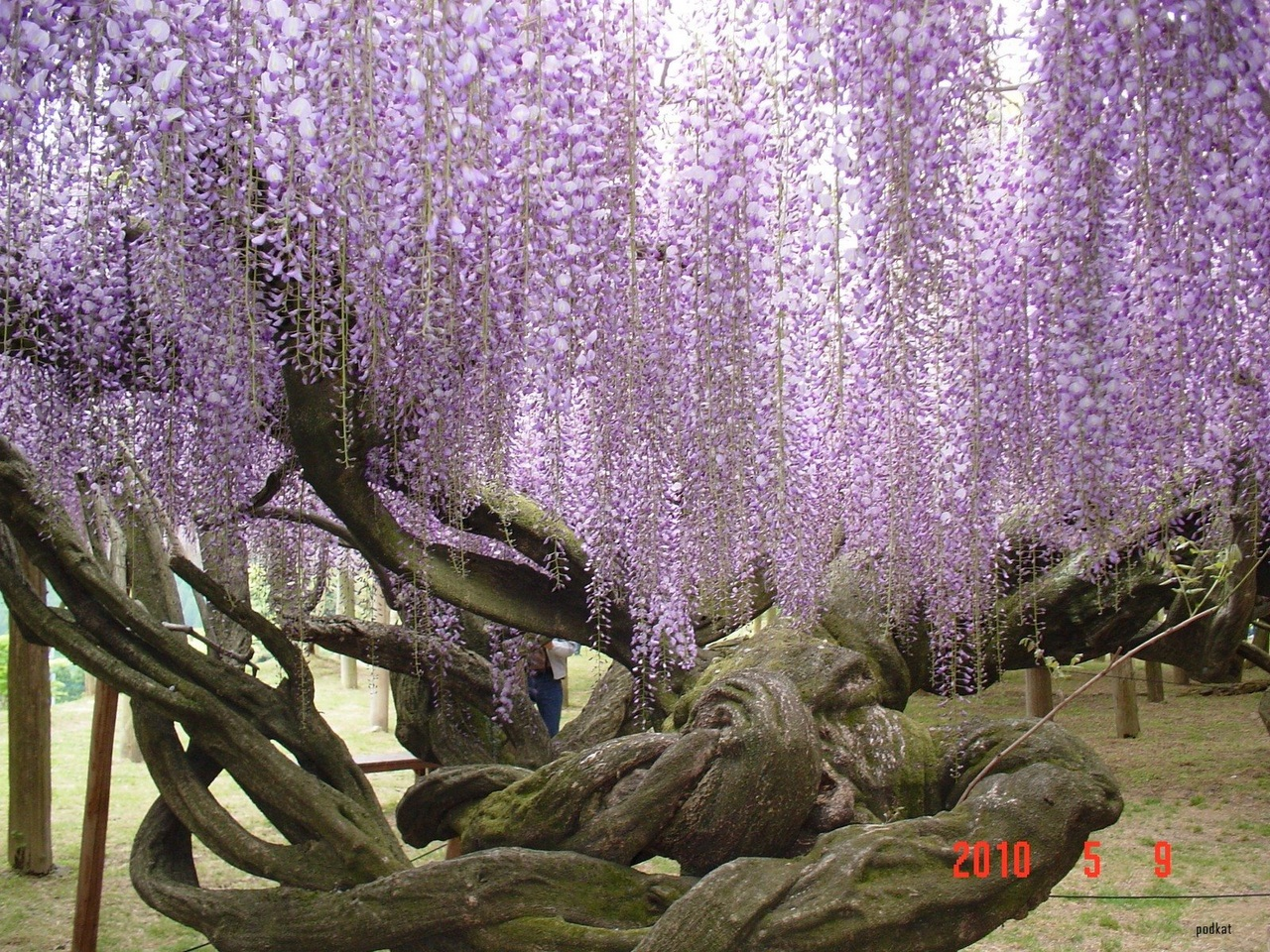 Японские цветы фото