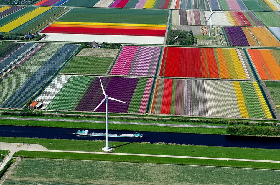 Над полями тюльпанов. 0_bceb3_40228163_orig