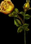 goldenrose5 copy.png