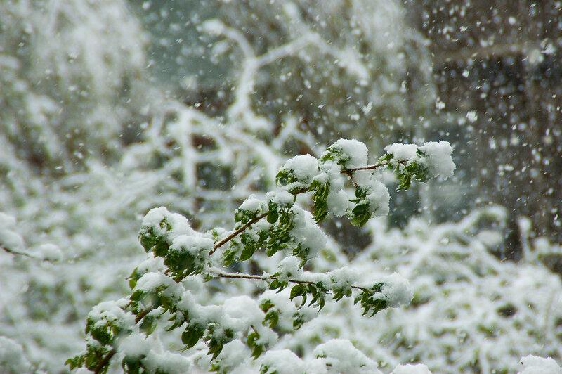 Майский снег в Барнауле